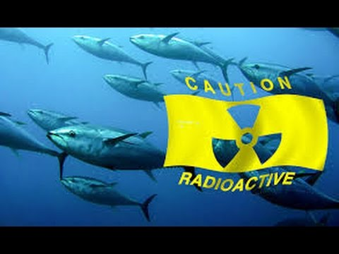 Deadly fukushima radiation discovered off the coast of canada for Pacific ocean radiation fish